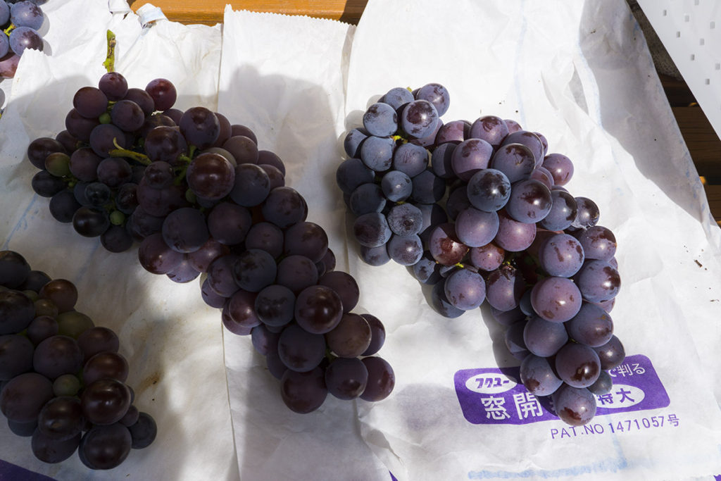 収穫したブドウ1