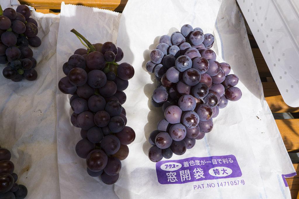 収穫したブドウ3
